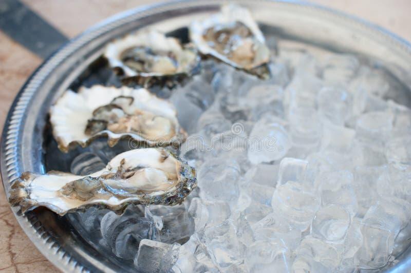 Mentira fresca das ostras em uma bandeja de gelo foto de stock