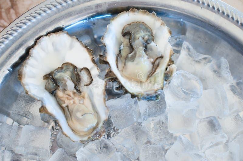 Mentira fresca das ostras em uma bandeja de gelo fotografia de stock royalty free