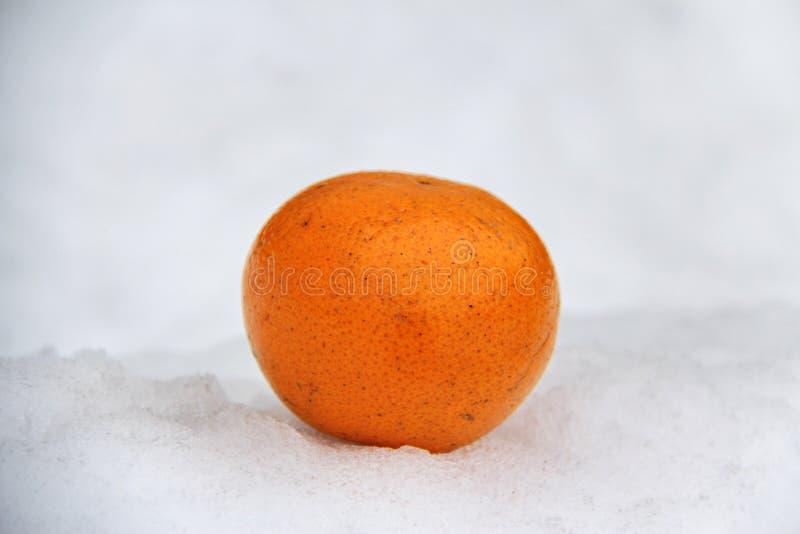 Mentiras alaranjadas laranja-vermelhos na neve de derretimento fraca branca foto de stock royalty free