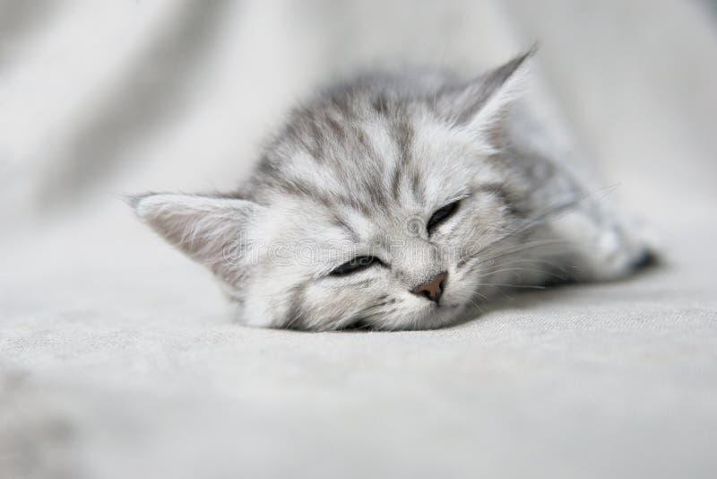 Mentiras y miradas del gatito foto de archivo libre de regalías
