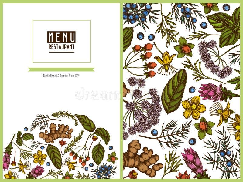 Menu okładkowy kwiecisty projekt z barwionym arcydzięglem, basil, jałowiec, hypericum, rozmaryn, turmeric ilustracja wektor
