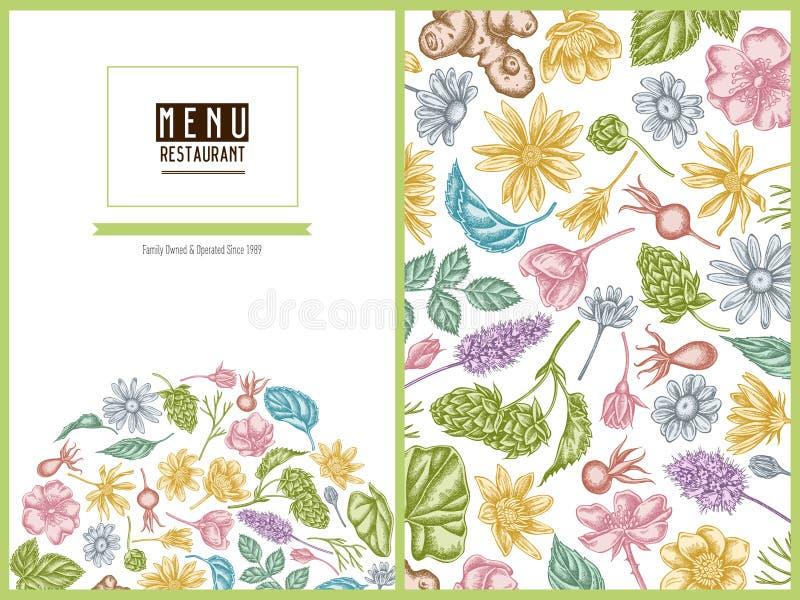 Menu okładkowy kwiecisty projekt z pastelowym glistnikiem, chamomile, pies róża, chmiel, Jerusalem karczoch, miętówka ilustracji