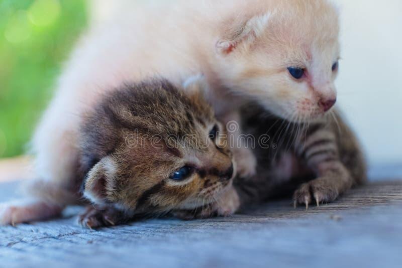 Menzogne adorabile del gattino due fotografia stock libera da diritti