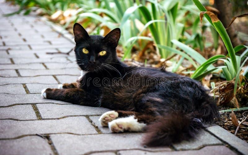 Menzogne di riposo del gatto su una pietra fresca un giorno di estate caldo immagini stock
