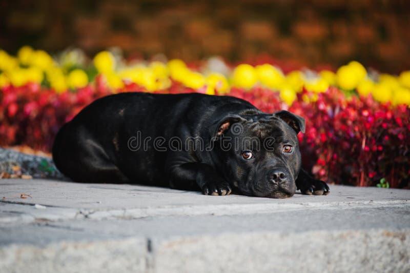 Menzogne di seduta del Terrier del cane sulla priorità bassa dei fiori immagini stock
