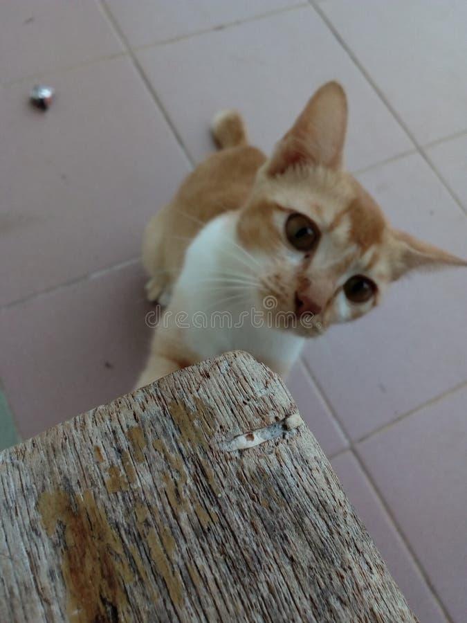Meow вы настолько милые Я не могу забыть вас Meow стоковые фотографии rf