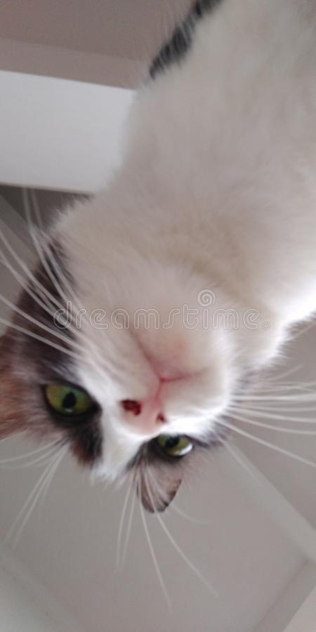 meow imagenes de archivo