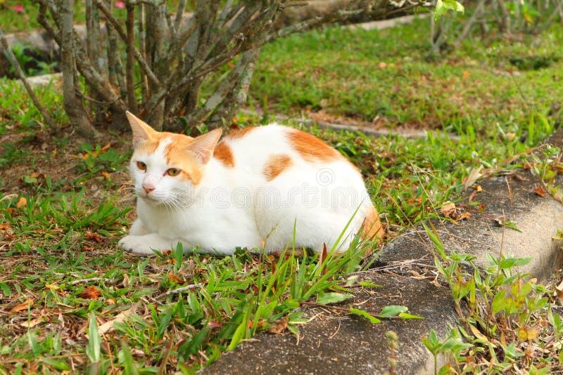 meow fotografia de stock