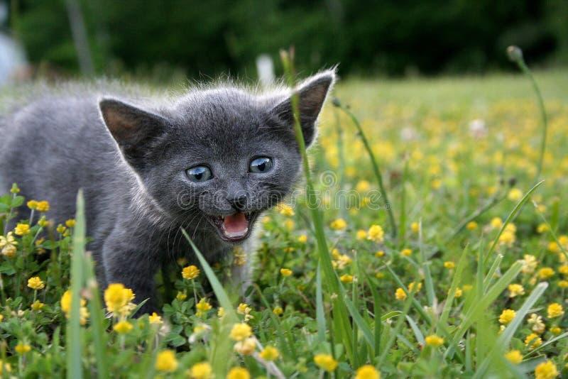 Meow stockfotografie