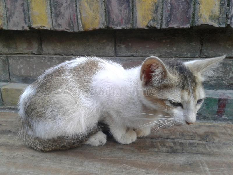 meow photographie stock