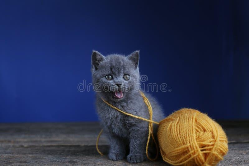 Meowing котенка и шарик пряжи Пол, смотря вверх стоковая фотография