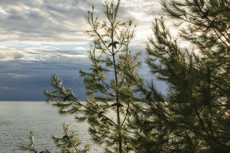 Mer Adriatique et le ciel de soirée d'automne Sapin avec des cônes dans le premier plan photo libre de droits