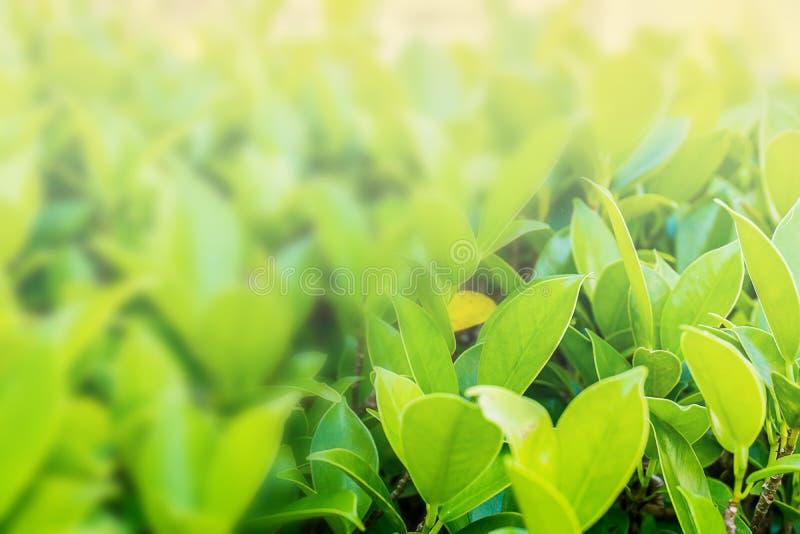 Mer blå bakgrund, grön natur med fritt utrymme som gör en backgrou arkivbild