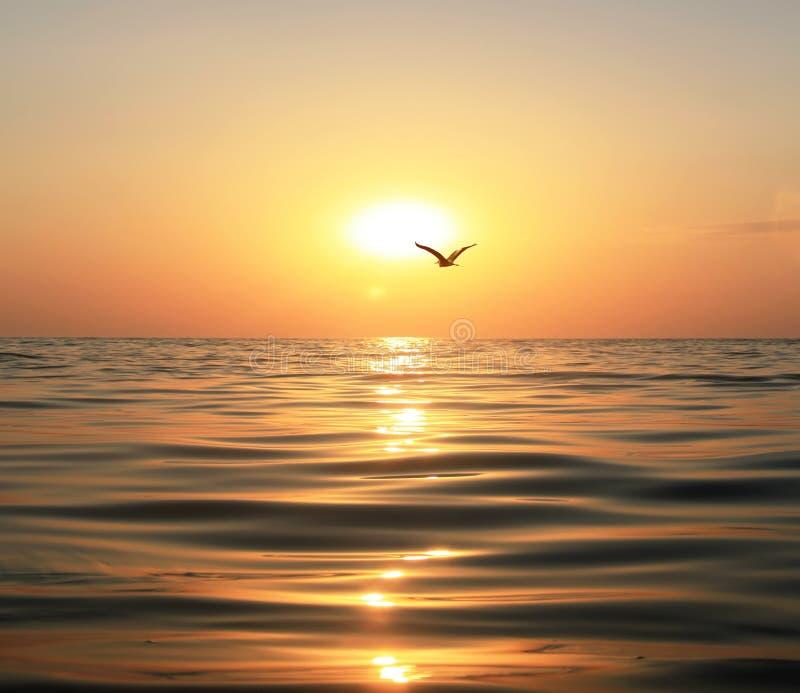 Mer, coucher du soleil et mouette images libres de droits
