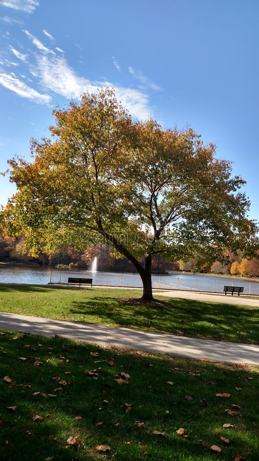 Mer d'Autumn Leaves image libre de droits