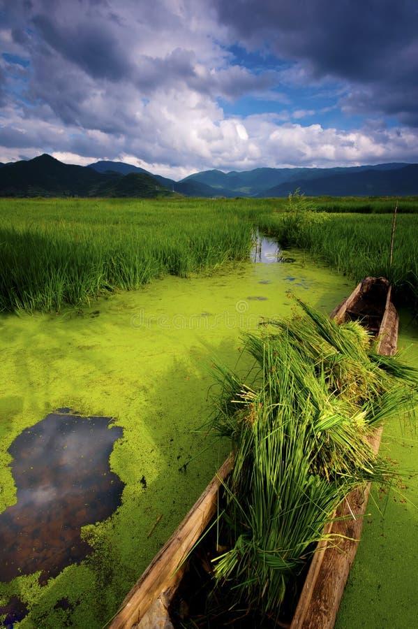 Mer d'herbe de lac Lugu images stock