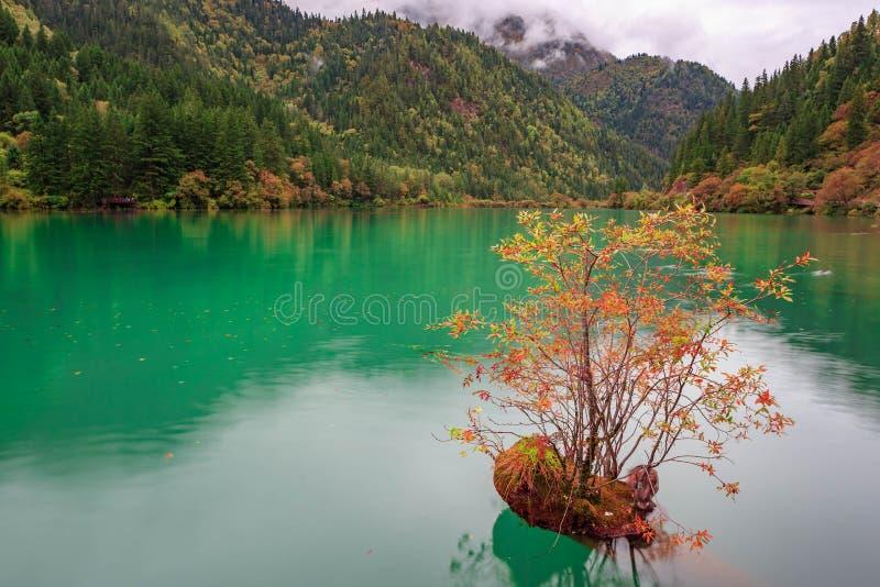 Mer de bambous de flèche de Jiuzhaigou photographie stock