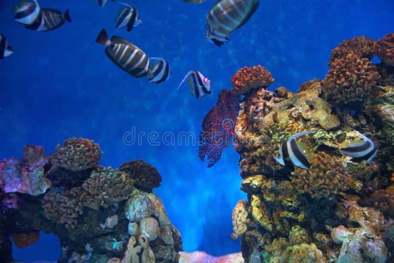 mer de corail de récif de poissons photos stock