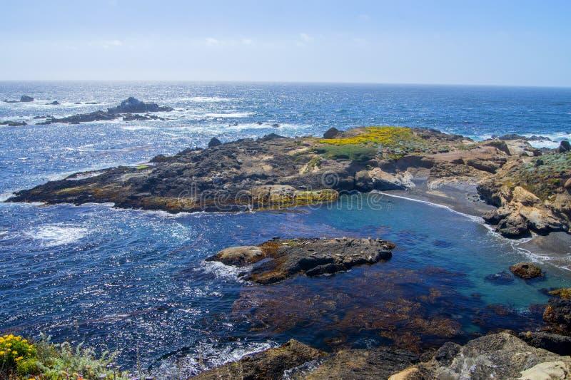 Mer de lion sur la roche, Monterey photos stock