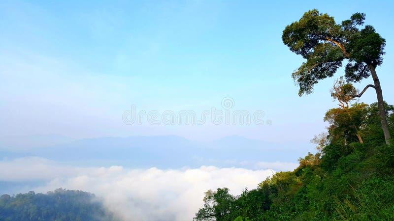Mer de paysage de brouillard pendant le matin image stock