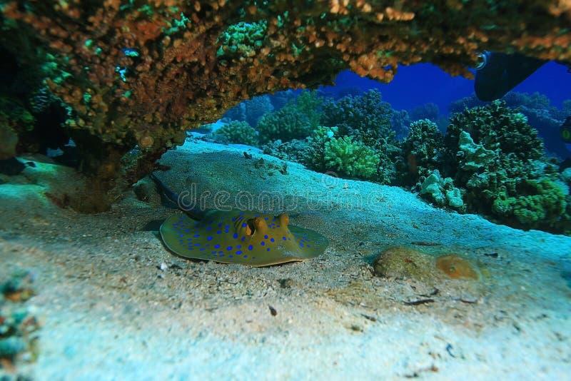 Mer de rampe sous l'eau images libres de droits