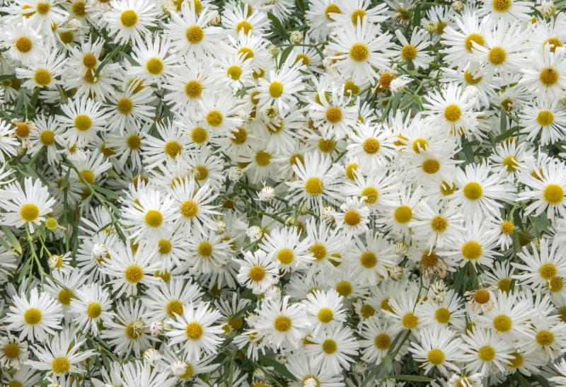 Mer des fleurs photo libre de droits