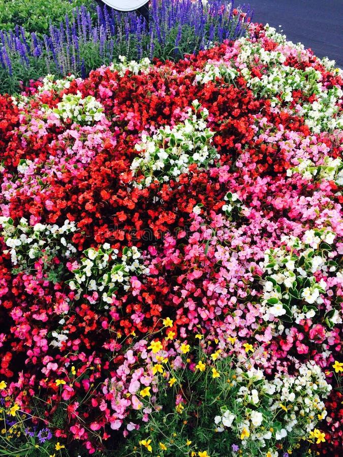 Mer des fleurs image stock