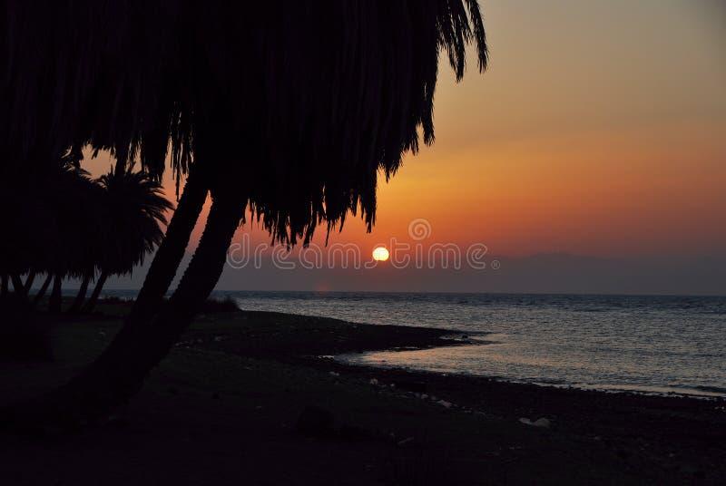 Mer et palmiers au lever de soleil photographie stock libre de droits