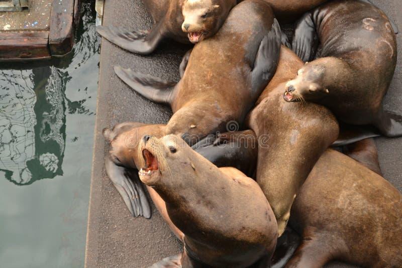 Mer Lion Barks images libres de droits