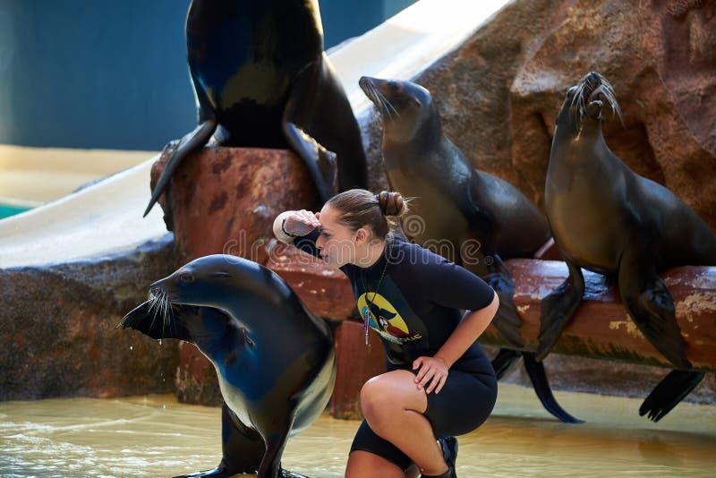 Mer Lion Show en parc de Loro Loro Parque Ténérife, Espagne photos libres de droits