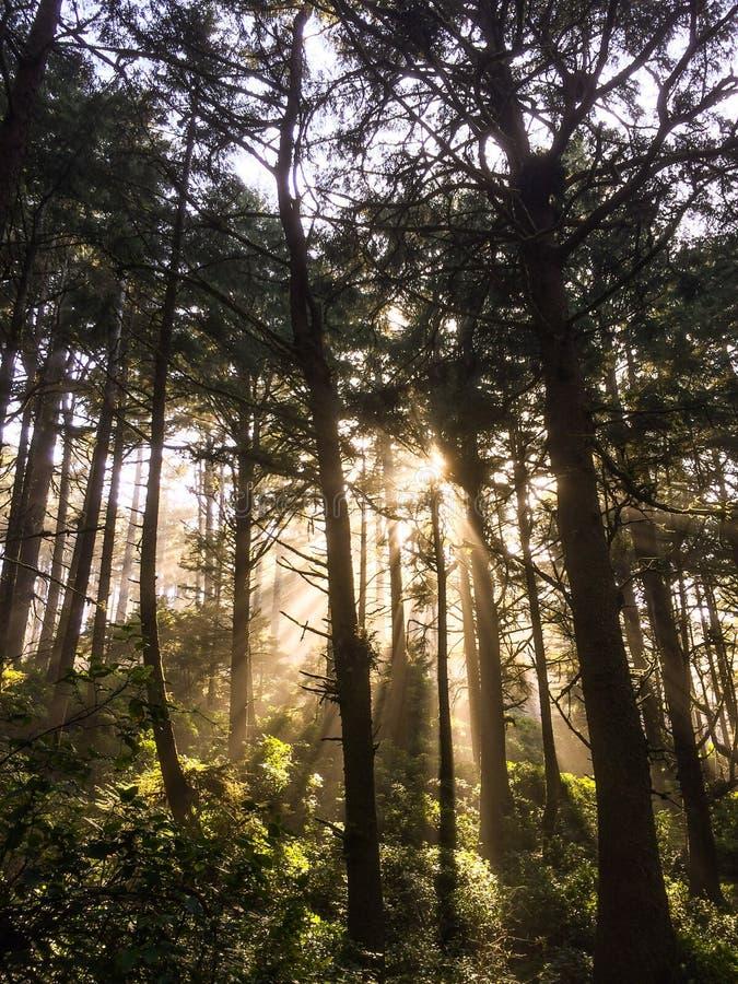 Mer ljus och träd arkivfoto