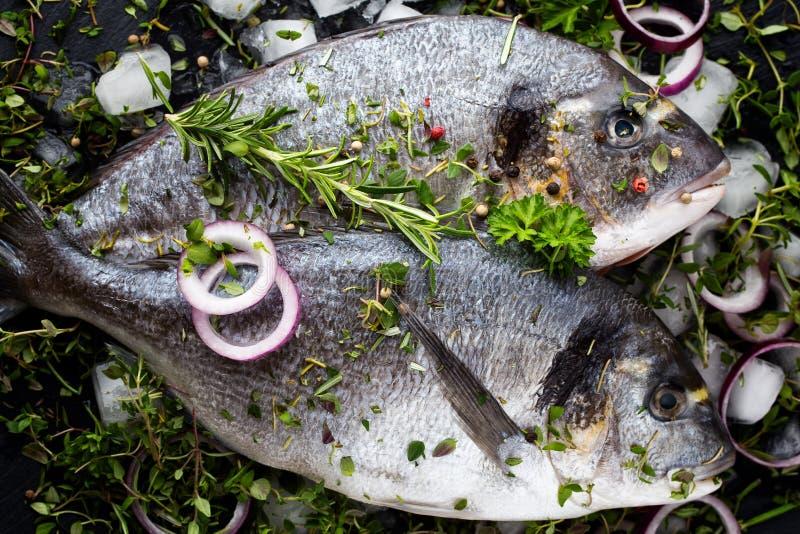Mer marinée de brème d'isolement sur le fond blanc photos stock