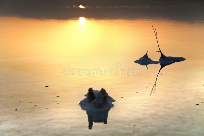 Mer morte - tiges de sel à l'aube image libre de droits