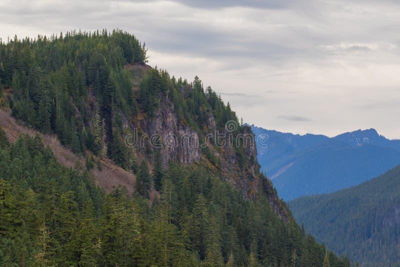 Mer regnig storslagna vintergröna träd för Mt på en stenig framsida royaltyfria foton