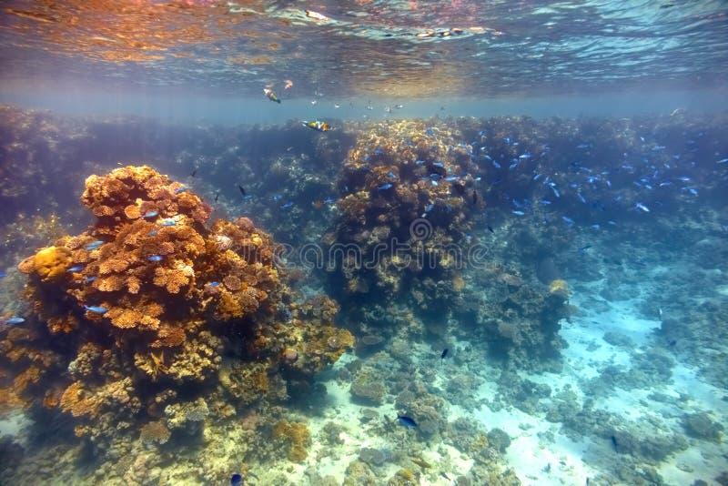 mer rouge de corail de récif photos libres de droits