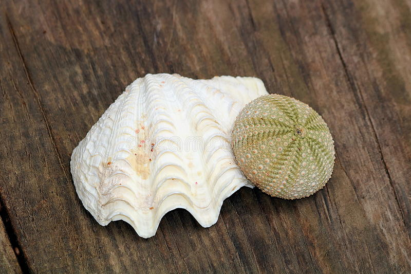 Mer Shell et oursin images stock