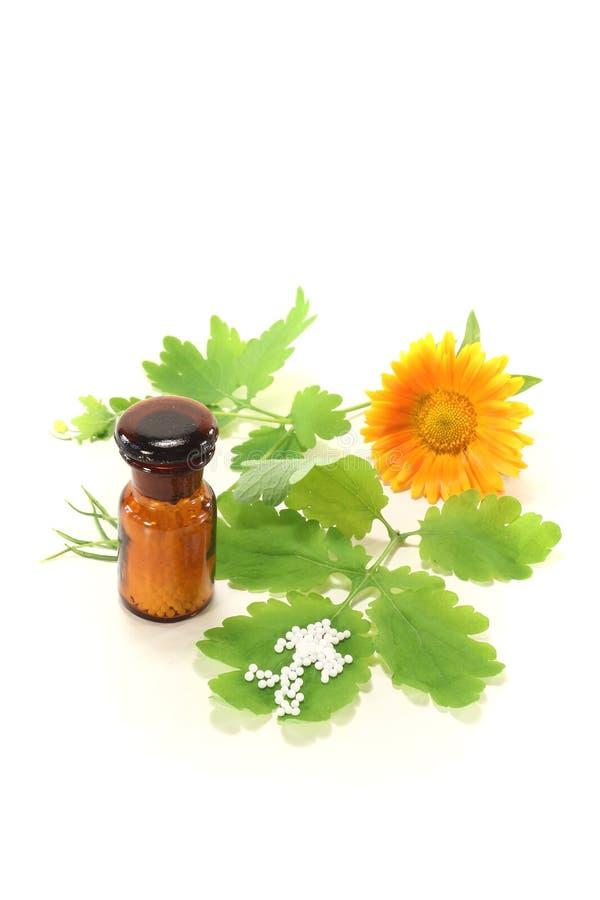 mer stor homeopathy för celandine arkivbilder