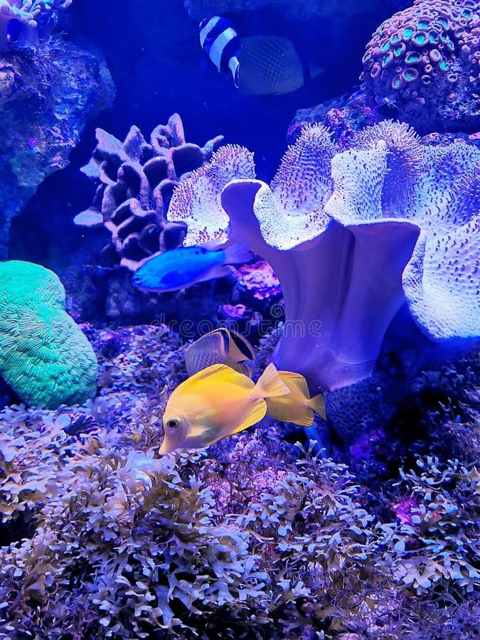 Mer World-flysea04 images stock
