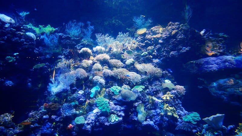 Mer World-flysea05 images stock