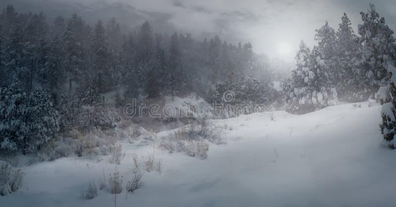 Meraviglia invernale fotografia stock libera da diritti