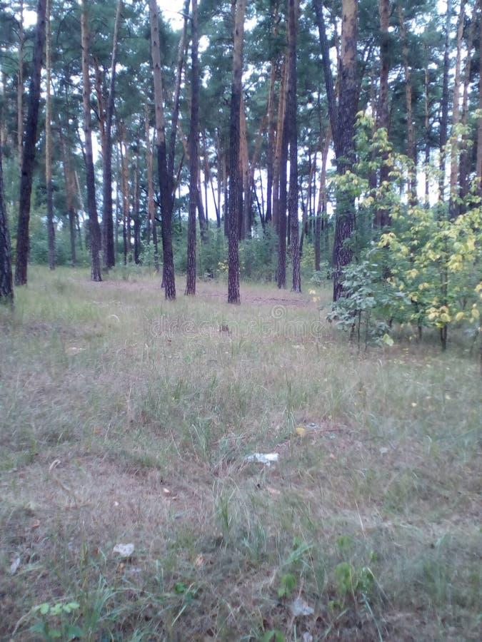 Meravigliosamente albero forestale e cielo immagini stock