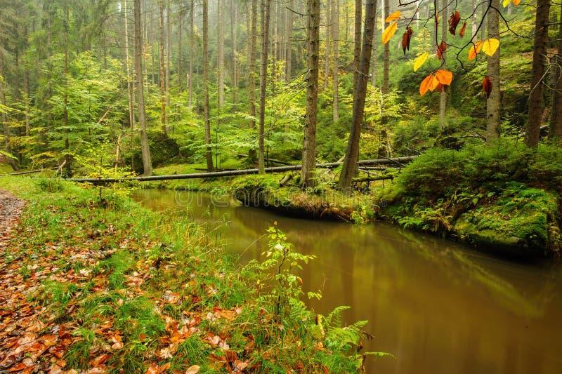 Meravigliosamente una foresta scorrente di autunno del fiume immagini stock libere da diritti