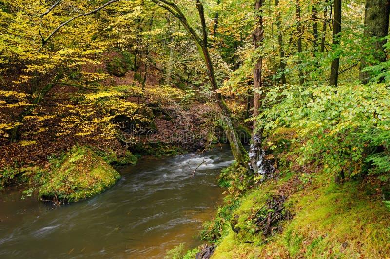 Meravigliosamente una foresta scorrente di autunno del fiume fotografia stock libera da diritti