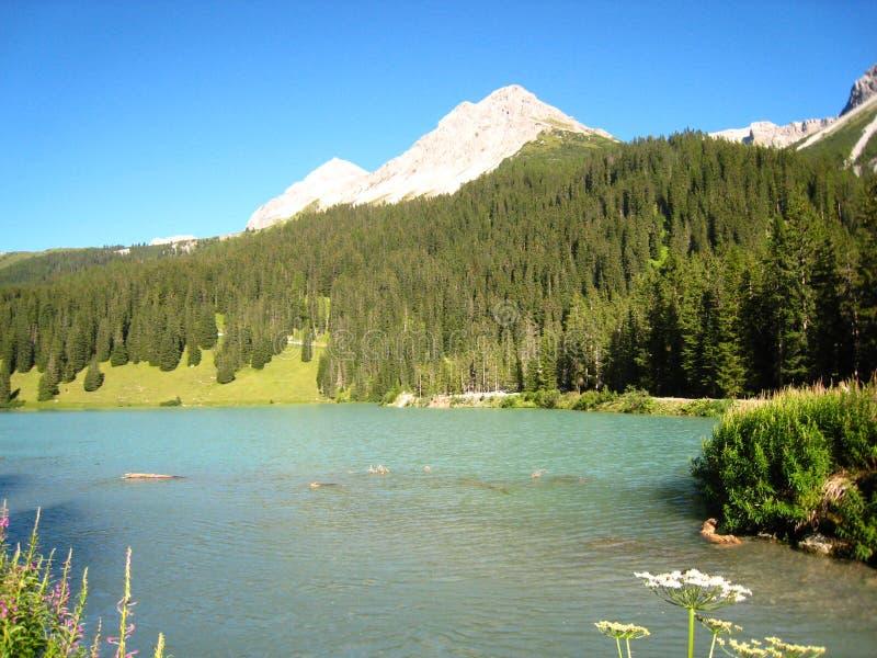 Meravigliosamente vista sopra un lago svizzero blu con le montagne ed i fiori innevati fotografia stock libera da diritti