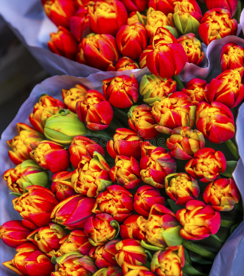 Mercado Amsterdão Países Baixos da flor de Bloemenmarket das flores das tulipas imagens de stock