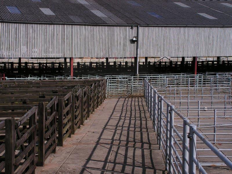 Mercado de ganado vacío imágenes de archivo libres de regalías