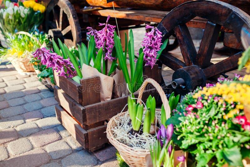 Mercado de la flor Las flores de la primavera en cajas y cubos alistan en venta Jacinto en caja Presente del día del ` s de la ma imagenes de archivo