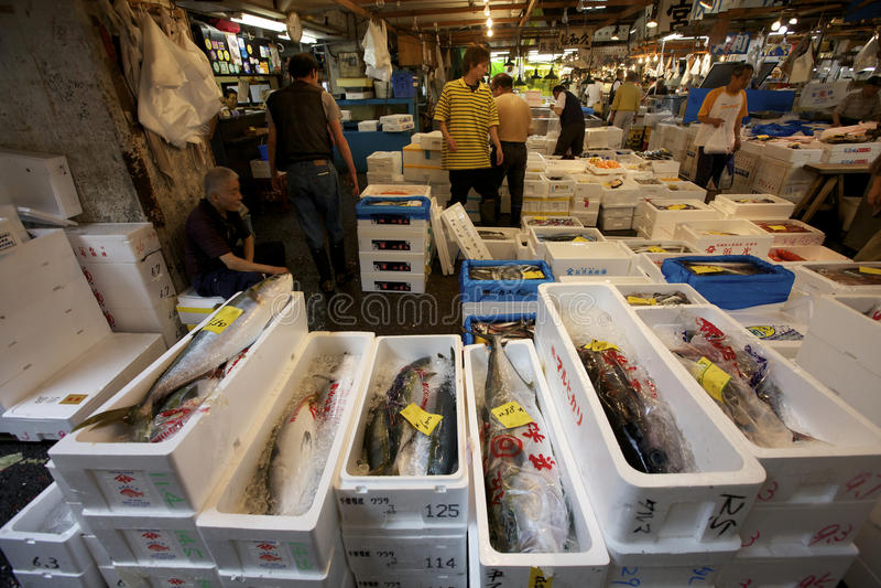 Mercado de peixes do marisco de Tsukiji de Tokyo imagens de stock royalty free