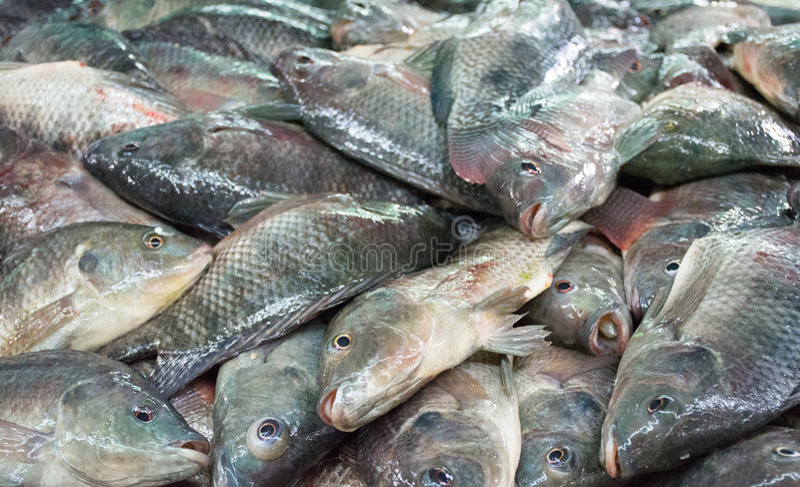 Mercado de peixes frescos mexicano fotografia de stock royalty free