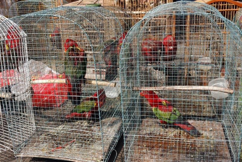 Mercado del pájaro de Pramuka, Jakarta, Indonesia imágenes de archivo libres de regalías